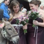 Wedding venues for animal lovers